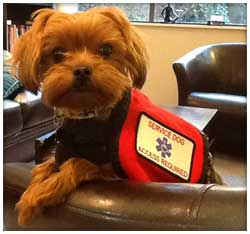 Animal Assisted Therapy Dog - Henry
